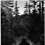 Profilbild von -Heimdall-