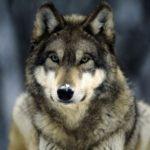 Profilbild von quorthon_wolf