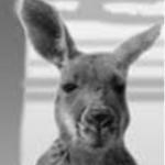 Profilbild von Känguru